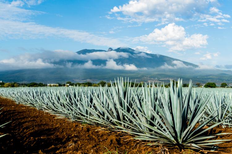 ¿Qué es el tequila?
